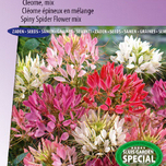 Katzenschnurrbart Colour Fountain mix (Cleome)