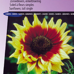 Sonnenblume F1 Magic Roundabout Mix (Helianthus)