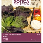 Xotica Amsoi Rot