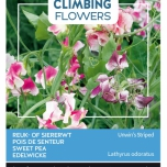 Flowering Climbers Lathyrus Unwin's Striped