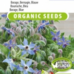 Borretsch blau EKO - Borago officinalis