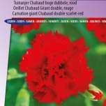 Nelke Etincellant Red – Dianthus Chabaud