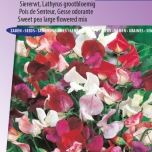 Duftwicke Royal Family Mix – Lathyrus Odoratus