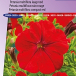 Petunia Multiflora Fire Chief Rot – Petunie