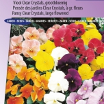 Veilchen Holland Giants Mix – Viola Clear Crystals