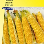 Zuckermais Earlibird F1 - Zea Mays